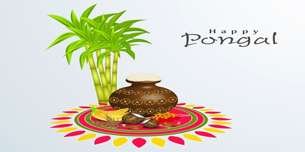 Happy Pongal Image Facebook DP